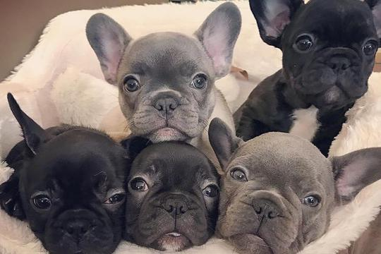 d29b9ff20b Ovo su 3 najpopularnije pasmine pasa na Instagramu - Miss7.24sata.hr